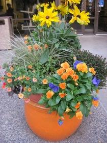 flowerar.jpg
